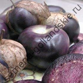 """Томатилло сорт """"ФИОЛЕТ""""(Tomatillo purple) 10 семян"""