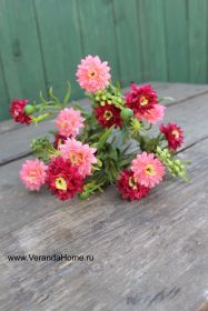 Хризантемка садовая бордо