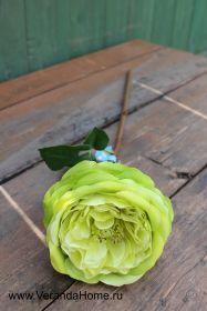 Роза пионовидная зеленая