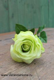 Роза зеленая