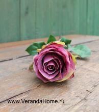 Роза пурпурная