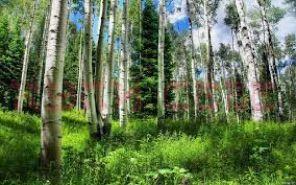 Продается земельный участок 19 км. Байкальского тракта г. Иркутска