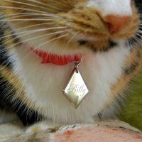 бирка адресник кот
