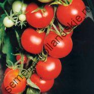 """Томат """"ТАМИНА"""" (Tamina) 10 семян"""