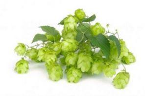 Хмель Mandarina Bavaria, альфа 9.2 (100 гр.)