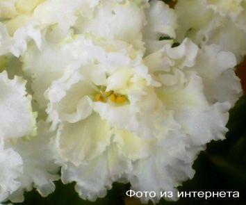 ЛЕ-Золотая Пена (Е.Лебецкая)