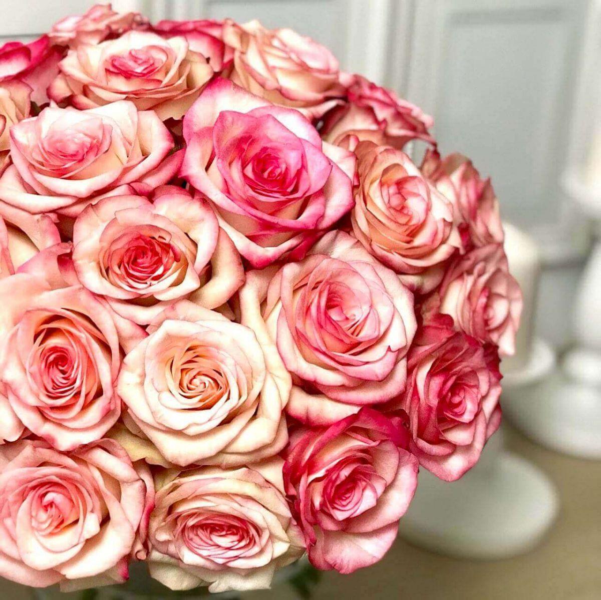 25 роз Paloma