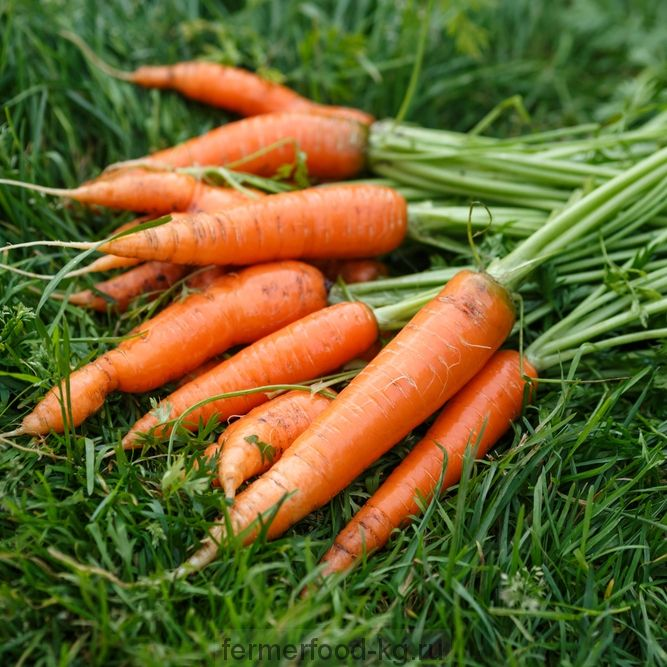 Морковь весовая 1/кг
