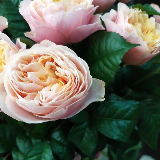 Букет крутых пионовидных роз