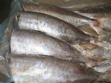 Саворин тушка 500 гр Мурманск от 5 кг