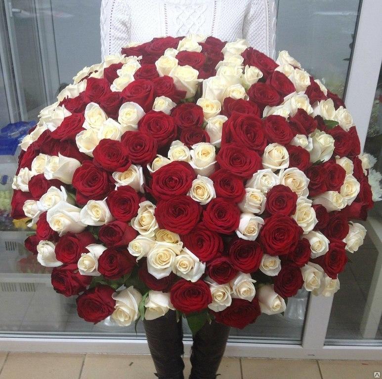 99 красно-белых роз