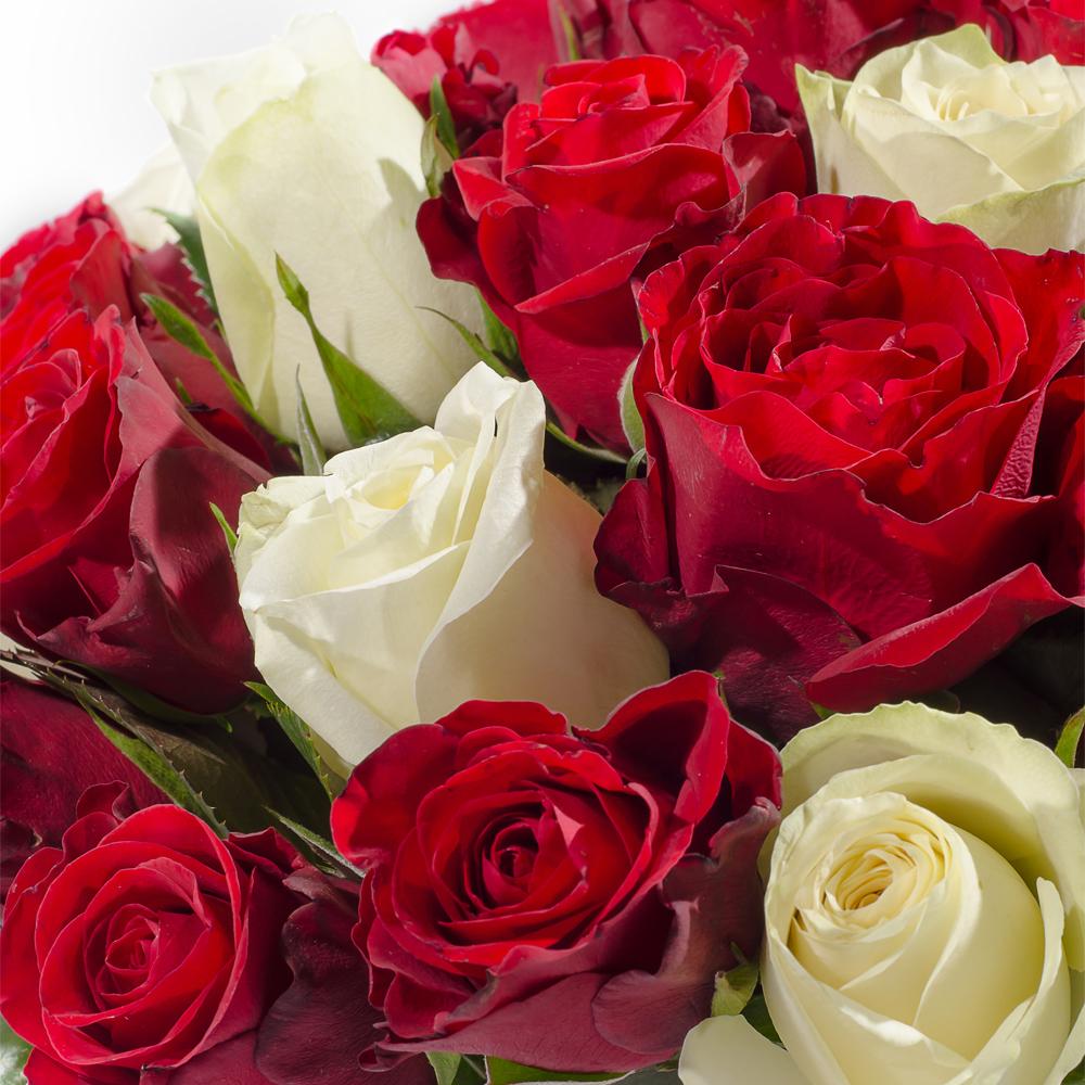 35 красно-белых роз