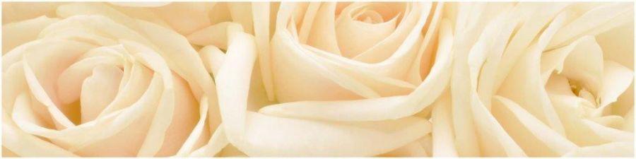 Кухонный фартук AG 03-Чайная роза цветы