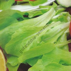 "Салат  сорт ""ВИТТЕ ДЮНСЕЛ"" (Witte Dunsel) 6500 семян"