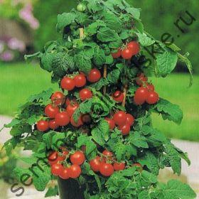 """Томат сорт """"РУБИ РЕД"""" (Ruby Red) 10 семян"""