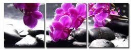 Ветви орхидеи