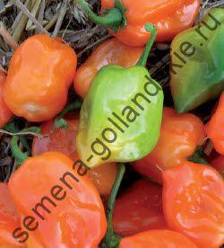 "Перец острый  ""ХАБАНЕРО ОРАНЖ"" (Habanero oranje)  10 семян"