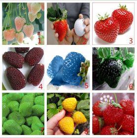 Семена клубники 9 разных цветов, 900шт