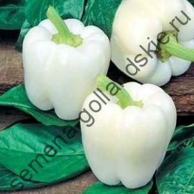 "Перец сладкий ""БЕЛЫЙ КОЛОКОЛ"" (White Bell) 10 семян"