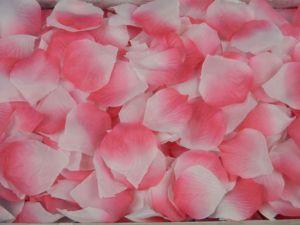 Лепестки розово-белых роз