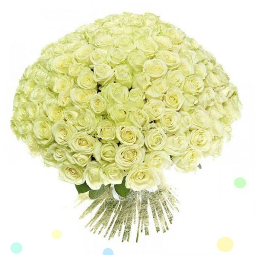 51 и 101 белая роза по оптовой цене