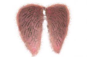 Крылья ангела розовые с пухом