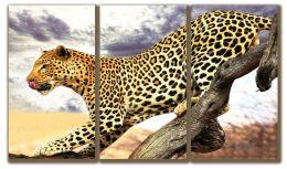 С грацией леопарда