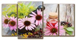 Эхинацеи цветки