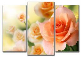 Персиковая роза 2