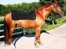 Для лошадей В НАЛИЧИИ