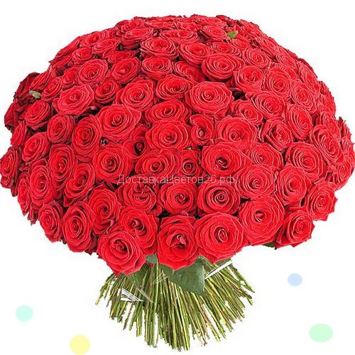 51 и 101 красная роза 60 см.