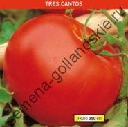 "Томат ""ТРЕС КАНТОС"" (Tres Cantos) 10 семян"