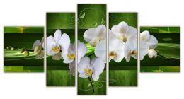 цветочки орхидей