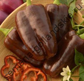 """Перец """"СЛАДКИЙ ШОКОЛАД"""" (Sweet Chocolate) 10 семян"""
