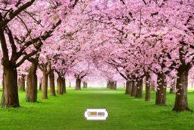 "Фон стена ""Spring"""