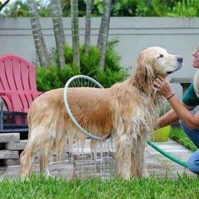 Устройство для мытья собак WoofVasher 360