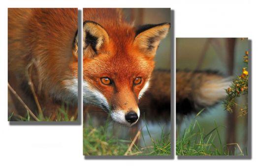 Модульная картина Взгляд лисы