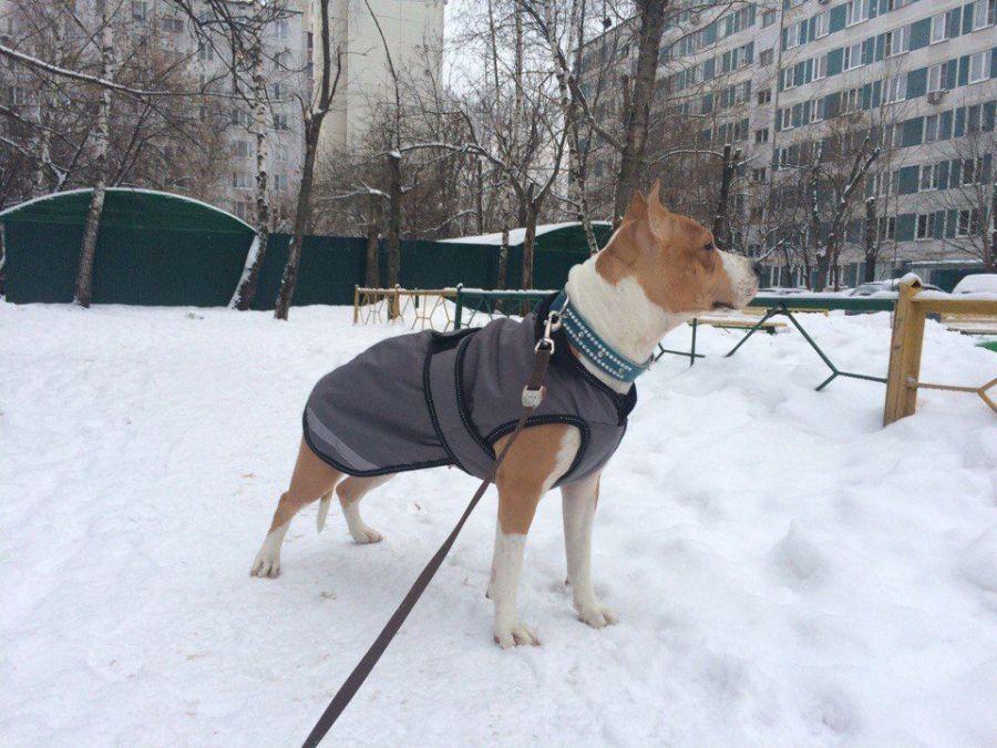 """Попона пальто для собаки """"Horse Comfort"""", 25-45 см. Утеплитель 100 грамм, нейлоновая подкладка 55 см"""