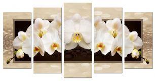 Орхидеи волшебные