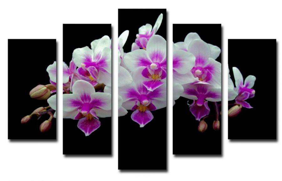 Модульная картина Орхидеи на черном