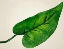 Листья каллы