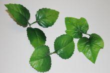 Листья плюща