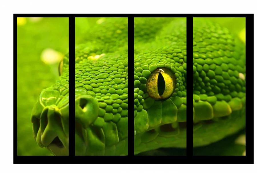 Модульные картина Желтые глаза на зеленом