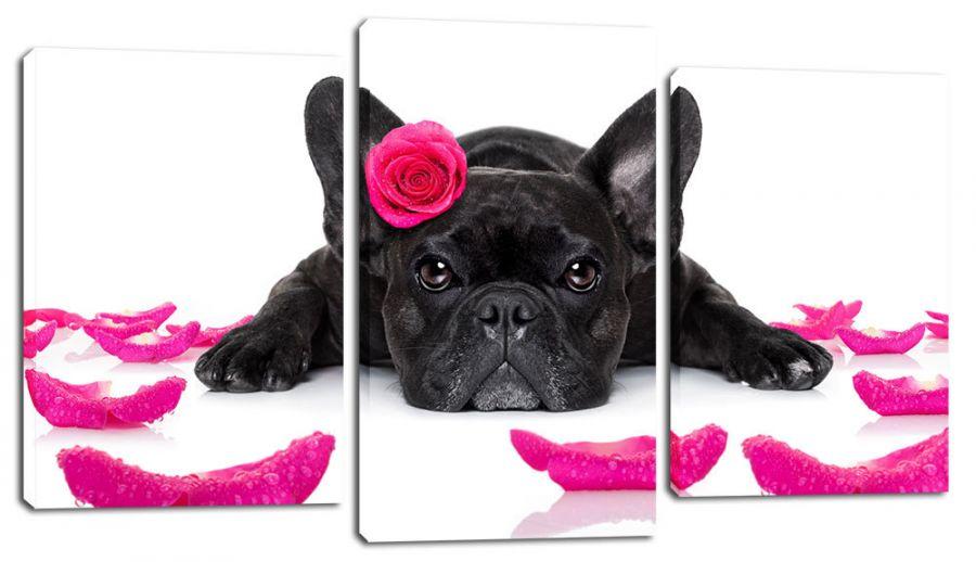Модульная картина Гламурный пес