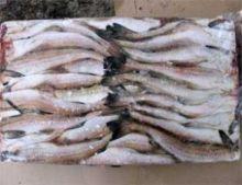 Минтай морской без головы тушка 25 см Мурманск от 11 кг