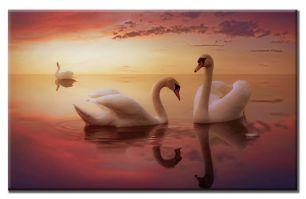 Лебеди на закате 2