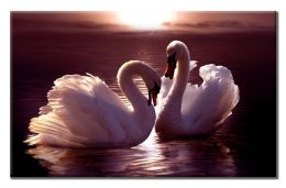 Лебединая пара на закате