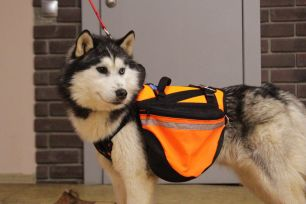 Рюкзак для собак NEW STEP