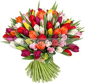 """Букет """"Радужный"""" 55 разноцветных тюльпанов"""