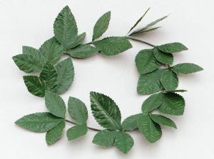 Лавровый венок зеленый